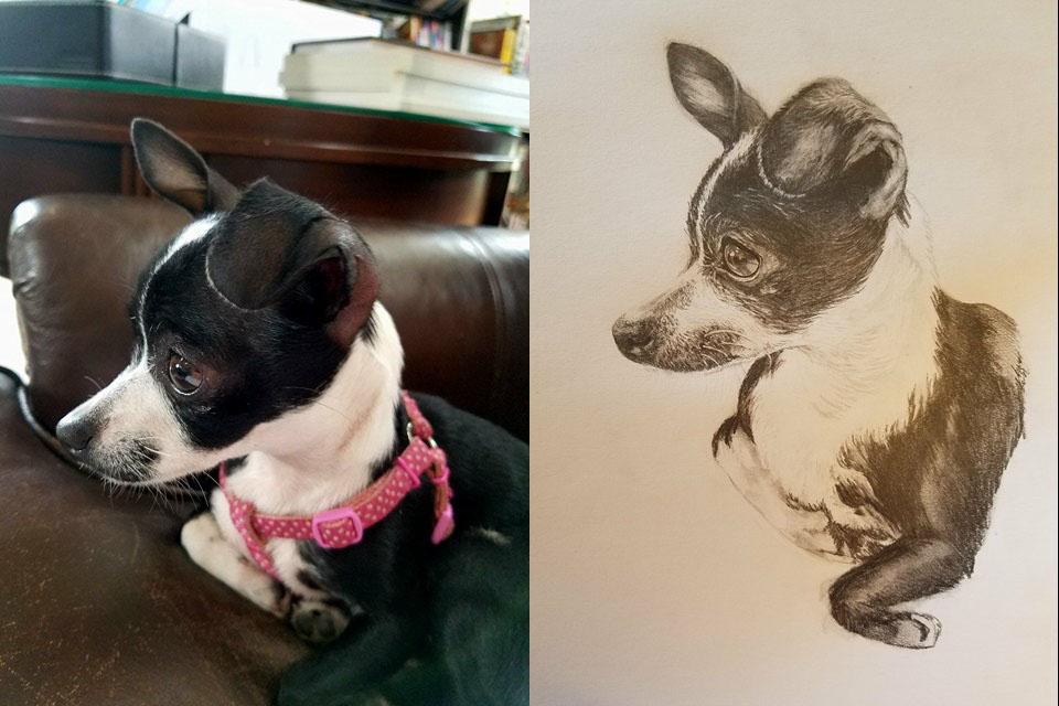 P. Chihuahua