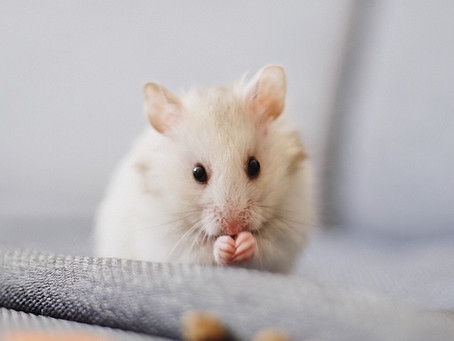 How do you know if you have Mice taking up rent in your home?