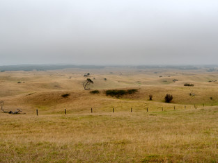 Foggy Flinders