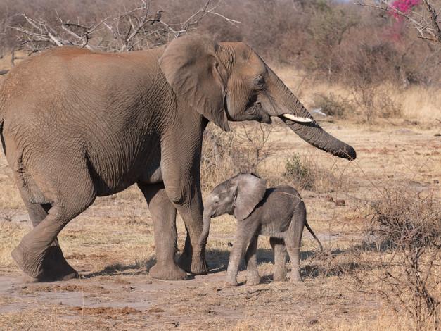 Newborn and Mum