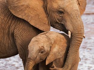 Maternal protection