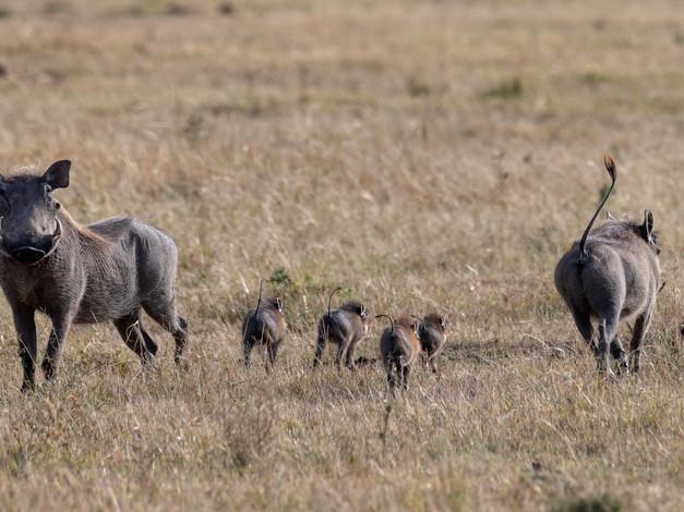 Pumbaa's Family