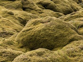 Lava & Moss 2