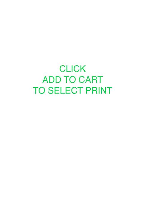 "24"" x 16"" Unframed Print"