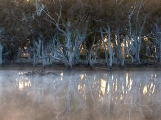 Old Gumtrees of Duck Lagoon