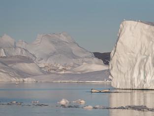 Humpback Whale - Illulissat Ice Fjord