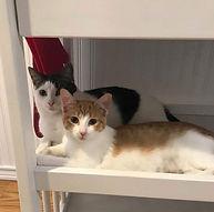 Oliver & Ginger
