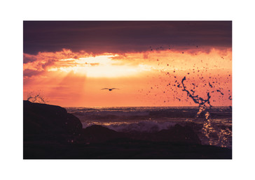Muriwai Sunset Seagull