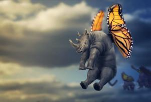 Monarch Rhinofly