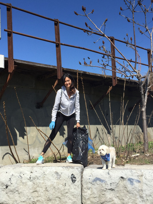 dog walking service in cityplace