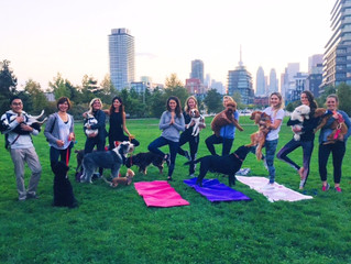 DOGA (doggie yoga)!