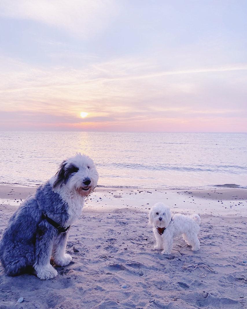 Dog walker Toronto