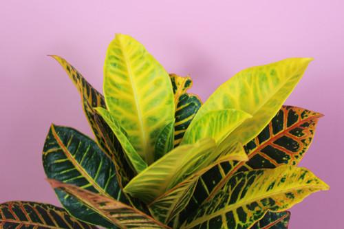Root Houseplants Buy Plants Online Based In Liverpool