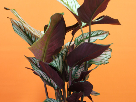What a plant wants. Tips for happy and healthy plants.