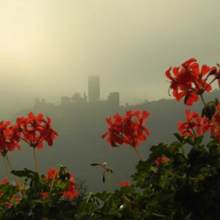Burg Metternich im Nebel.jpg
