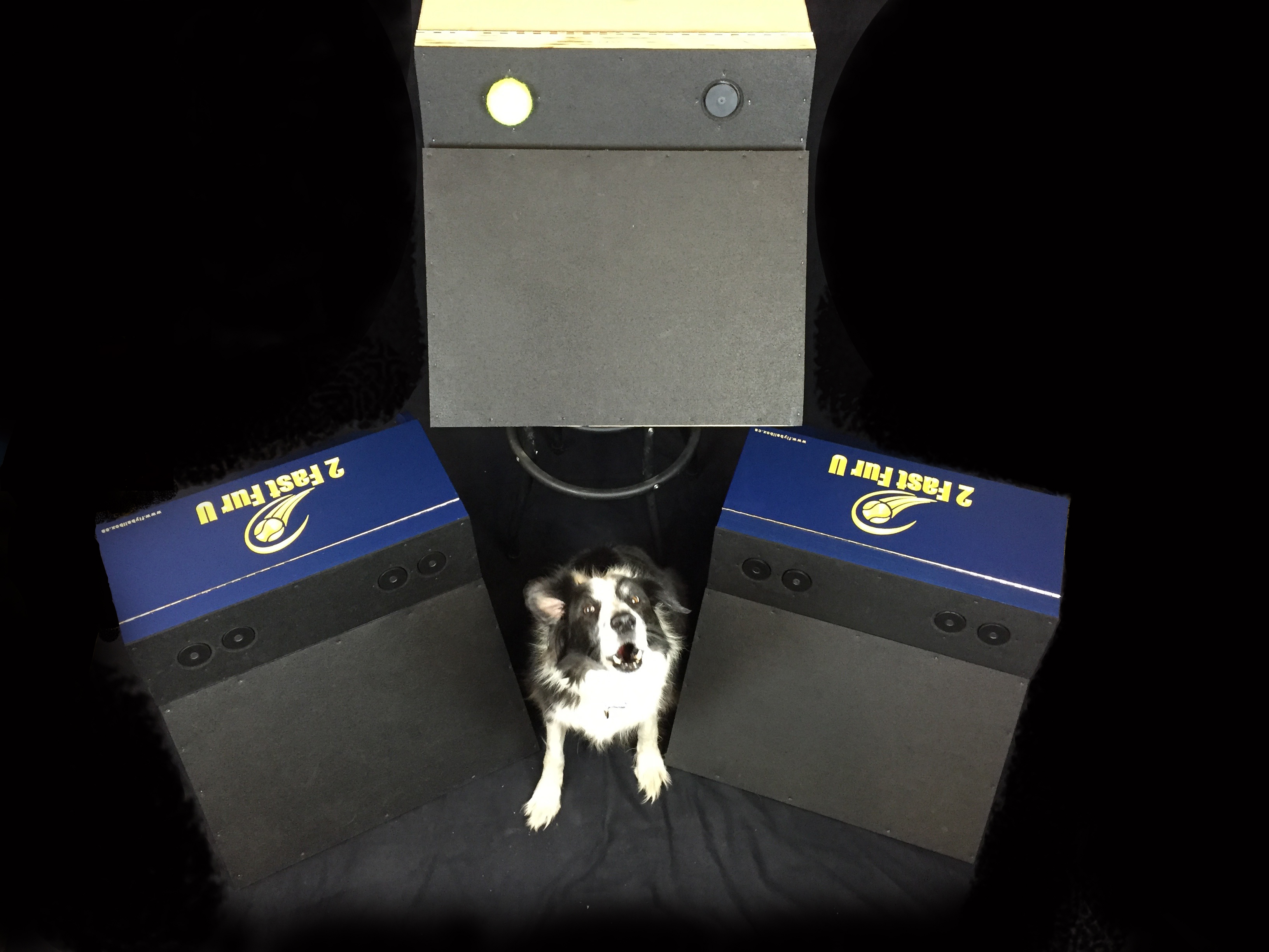 Custom Flyball Boxes