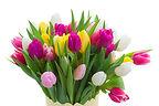 colorido de las flores
