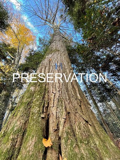 Préserver un arbre-habitat