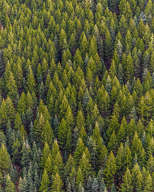 color-conifer-daylight-1179229.jpg