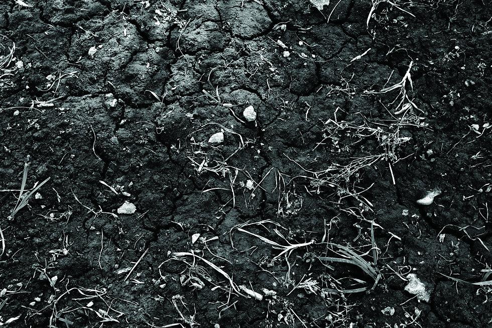 brown-green-sand-plant-72189.jpg