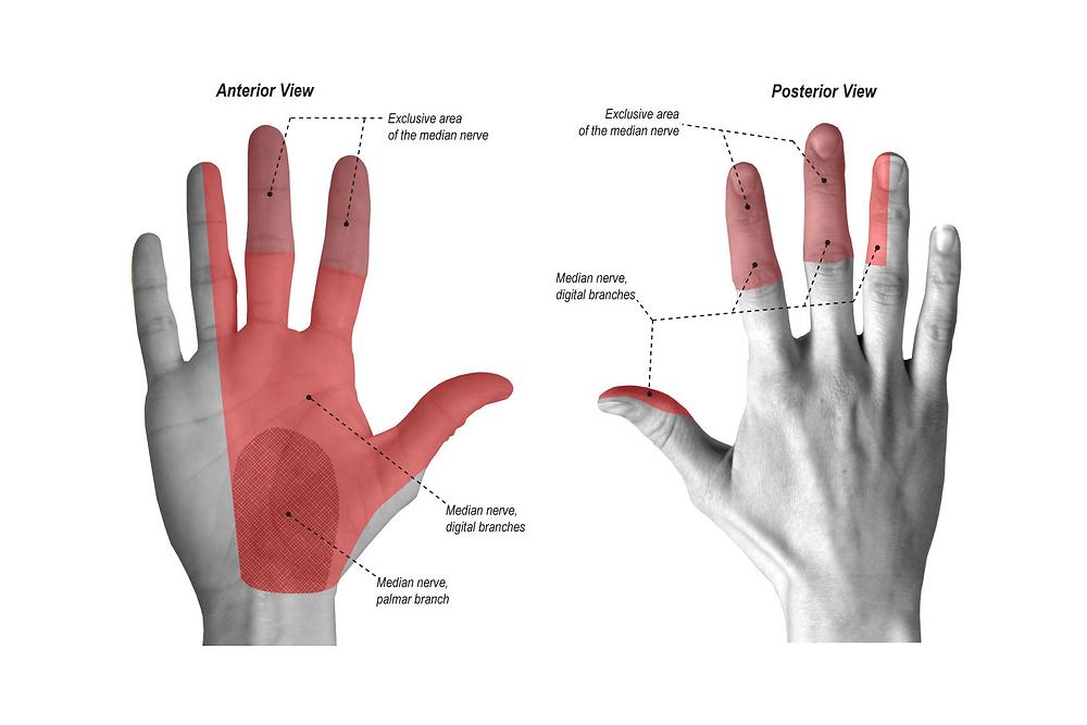 Tunnel carpien ostéopathie Ostéo-Solution osteopathe études ostéopathie thérapie manuelle nerfs formation