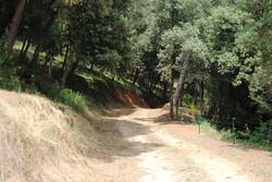 Camins-Paths 4