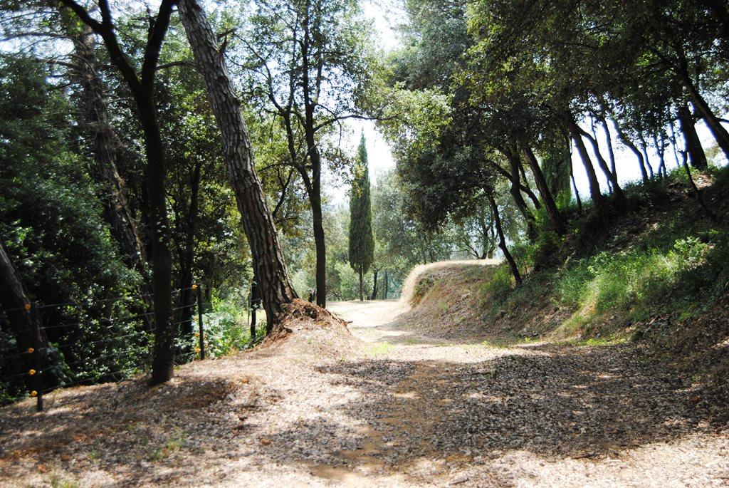 Camins-Paths 2