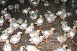 Granja-Farm 2