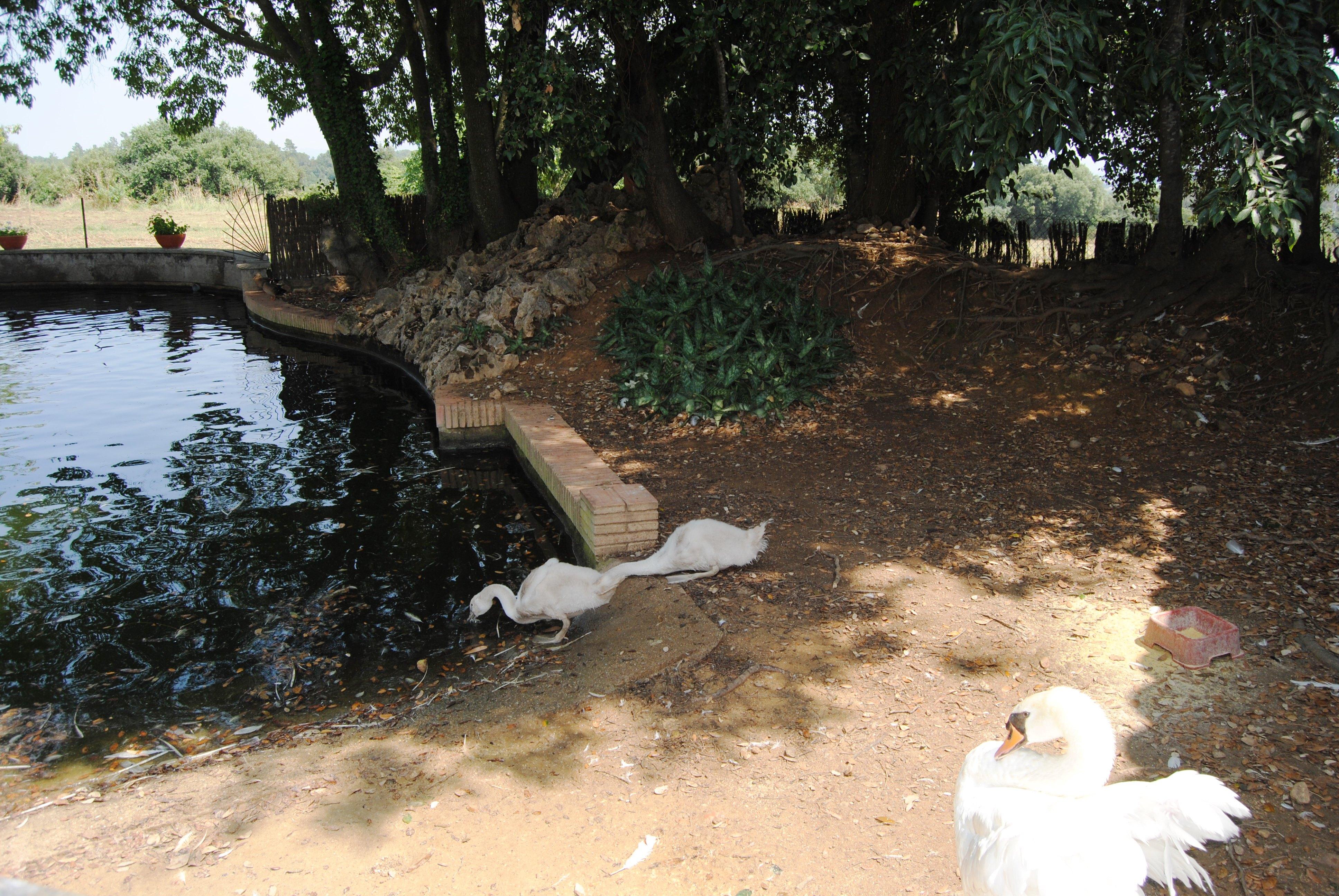 Granja-Farm 6