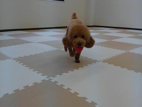 犬と遊んでいますか
