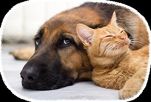犬・猫のペットシッター