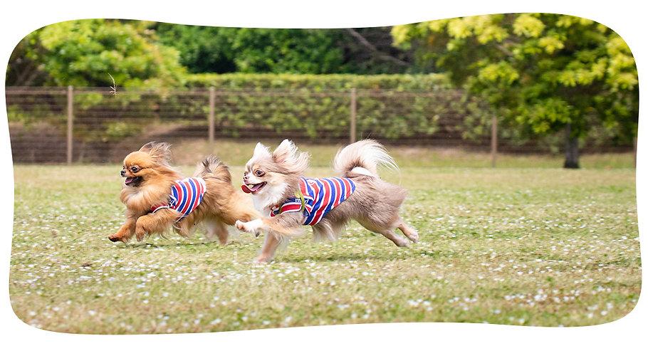町田市の犬の保育園 Allenatore(アレナトーレ)