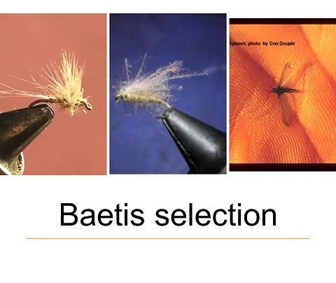 Baetis Selection size 18