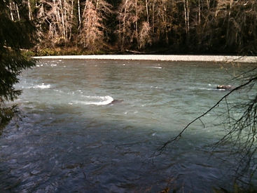 Upper Queets River 2.jpg