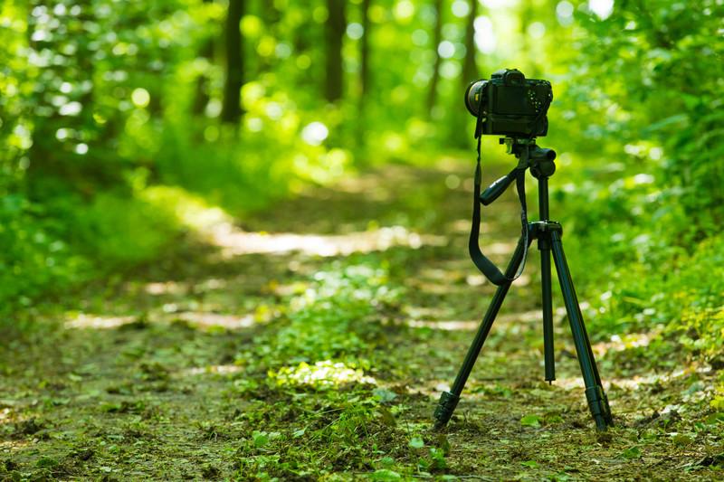 Video Nature
