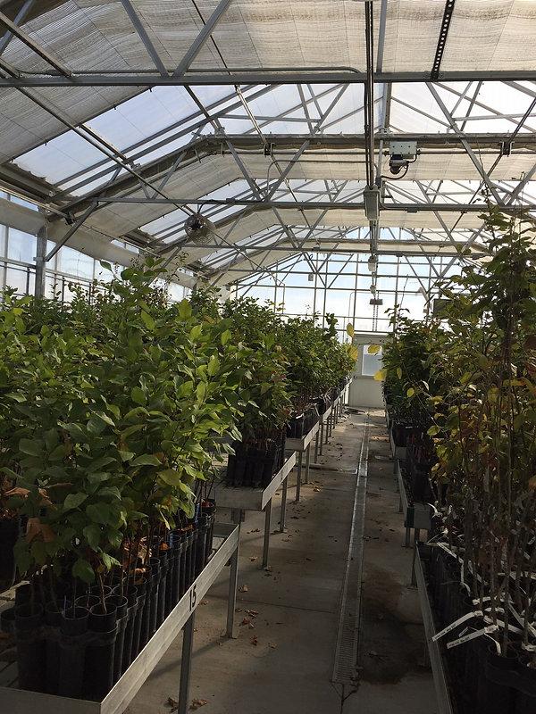 greenhouse 4.jpg