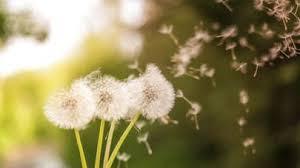 Allergies: on s'en débarrasse sans attendre!