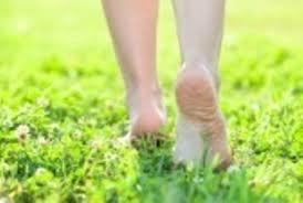 La nature à portée de pieds