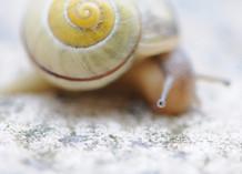 L'importance du Slow dans la vie