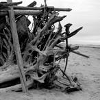 Driftwood One
