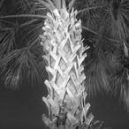 Head Lamp Palm