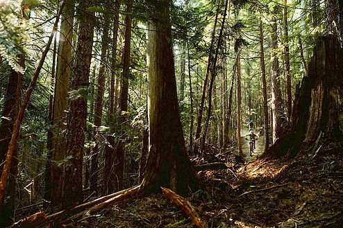 Forrest in BC Canada