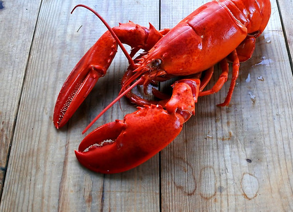 Whole Lobster (Cooked)