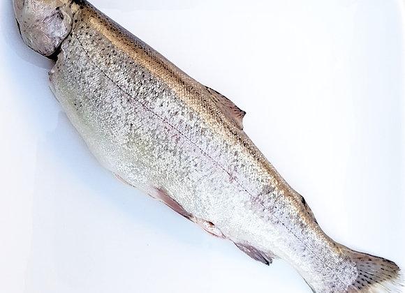 Rainbow trout at Chef Nemo