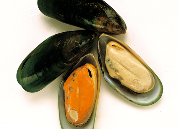 New Zealand Mussels (Cooked)