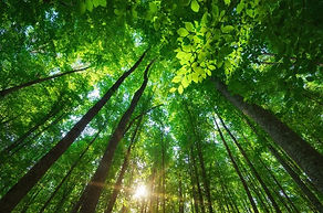 Die Kraft der Natur