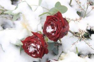 White Snow Black