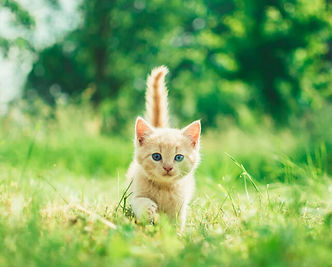 Kitten-640x514.jpg
