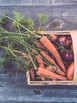 Homegrown Veg and Peat-free Gardening