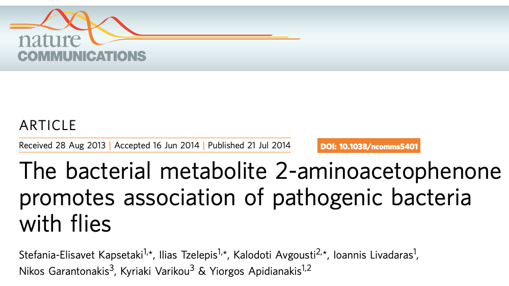 The bacterial metabolic 2-aminoacetophenone promotes association of pathogenic bacteria with flies